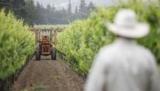 Нам відкорковує спір Канадське вино