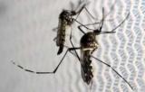 З початку року в Україні зафіксовано 29 завезених випадків малярії, 3 хворих з малярією померли
