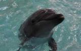 Боевые дельфины ВМС Украины умерли от голода в Крыму